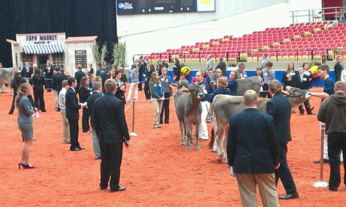 students judging at World Dairy Expo