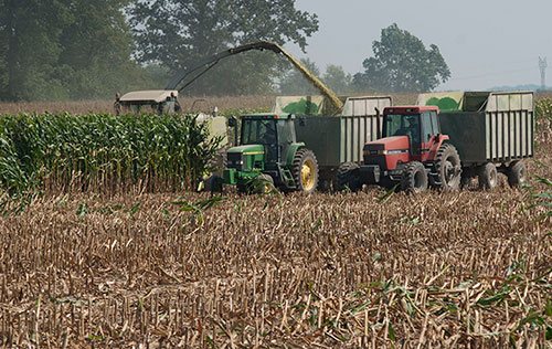 chopping corn silage in field