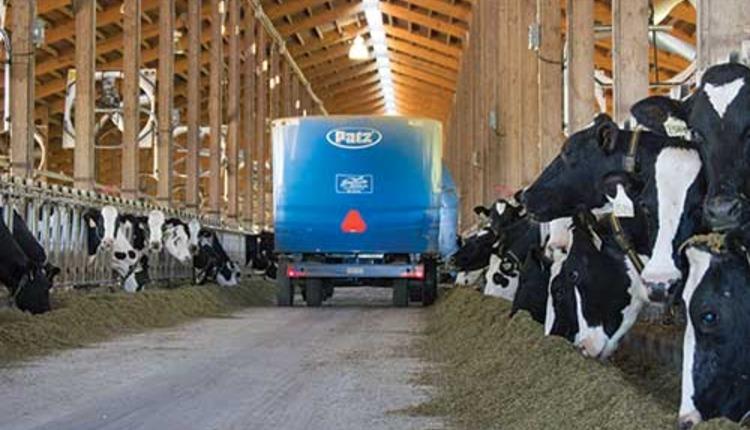 140810_489-feeding-dairy-cows.jpg