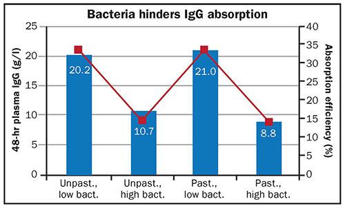 Bacteria hinders IgG absorption