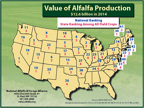 alfalfa bales