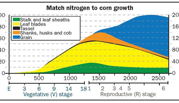 1612_748-corn-N