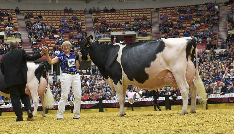 16HAE-Grand-Holstein-Sheehan