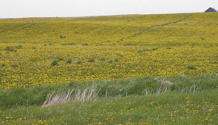 170410_262-weeds