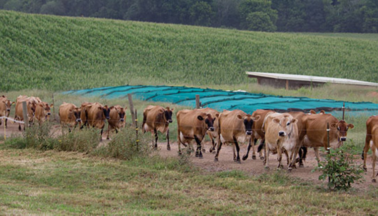 180310_146-Lutz-pasture