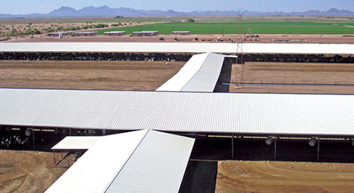 Arizona dairy