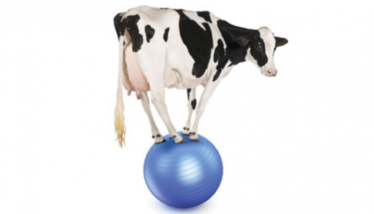 Evolution-Cow-on-Ball