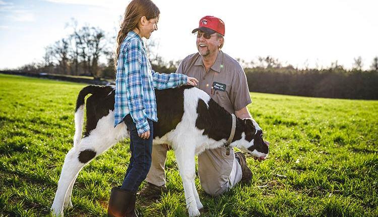 HDN_MR-feeding-calf