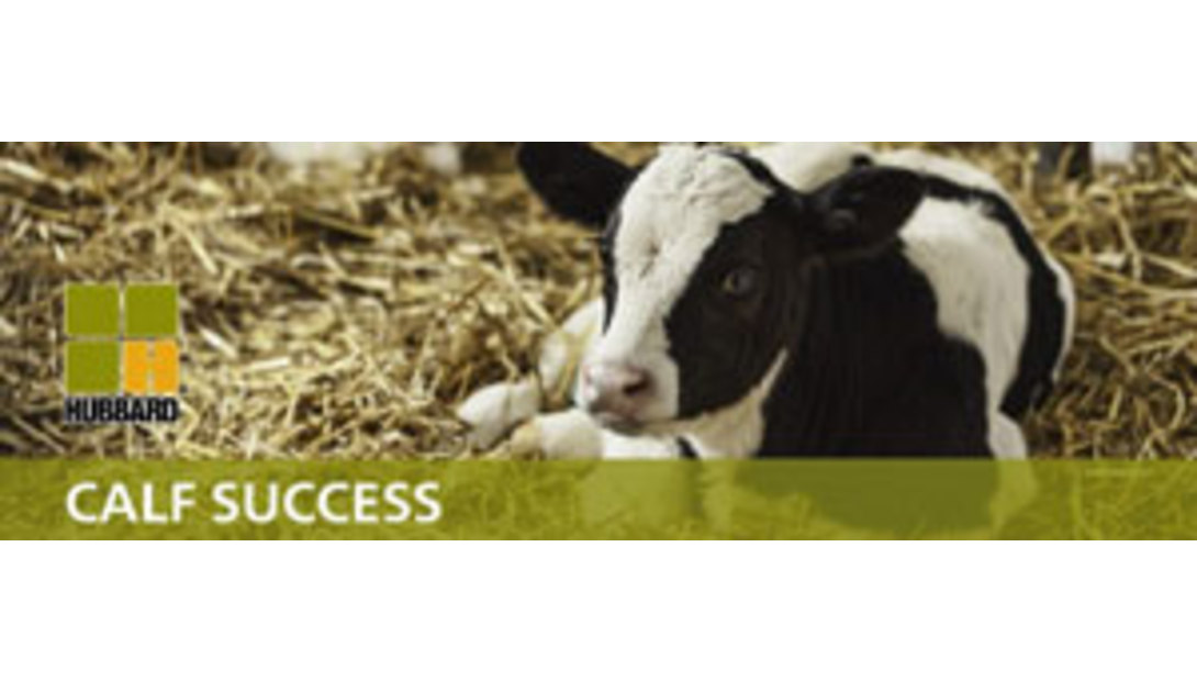 Hubbard-Calf-Success.jpg-header
