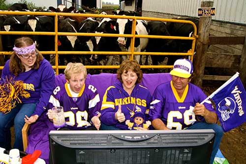 Dairy family showing pride for Minnesota Vikings