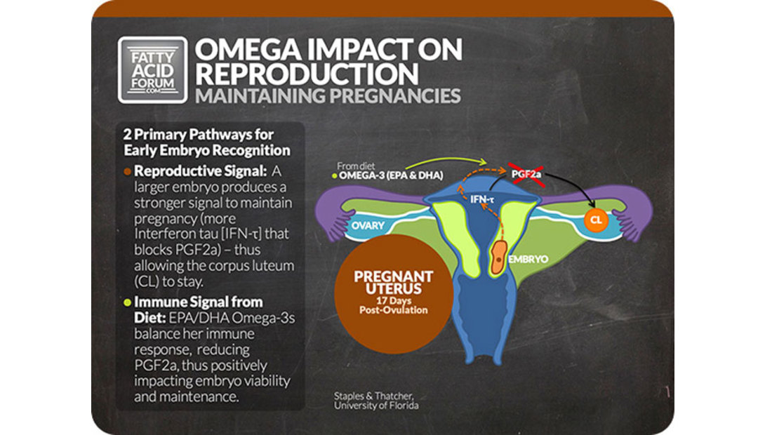 Omega-impact-on-reproduction.jpg-pic