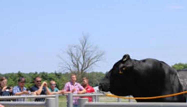 SSI-bull.jpg-pic