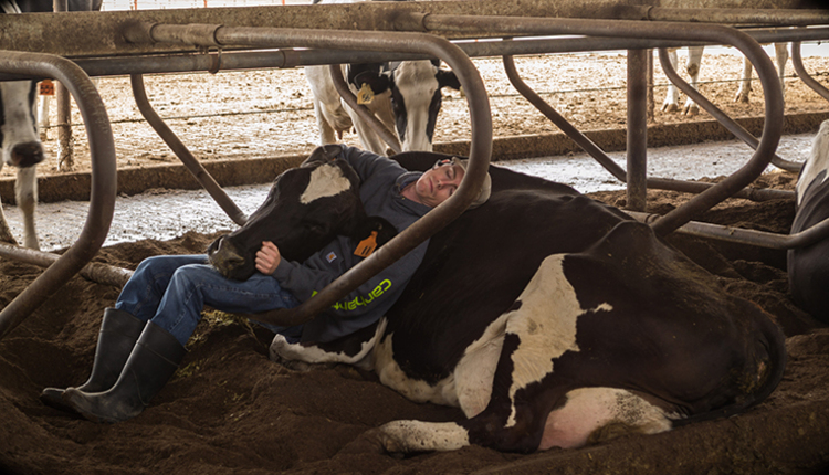 TR-cow-loss