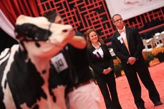 2014 Junior Holstein show judges