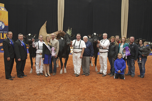 Grand Champion Holsteins