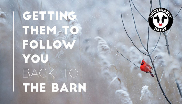 back-to-the-barn