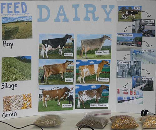 dairy display