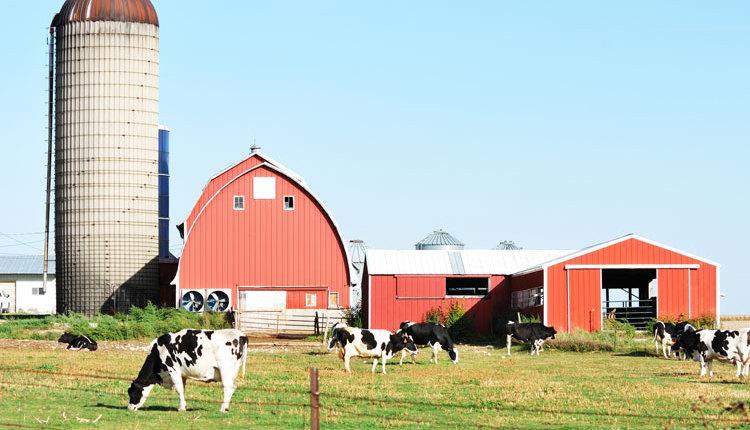dairy-farm_ph