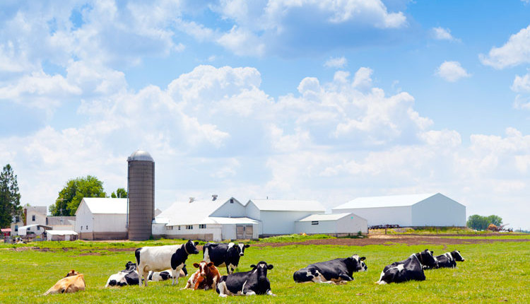 dairy-farm_ph3