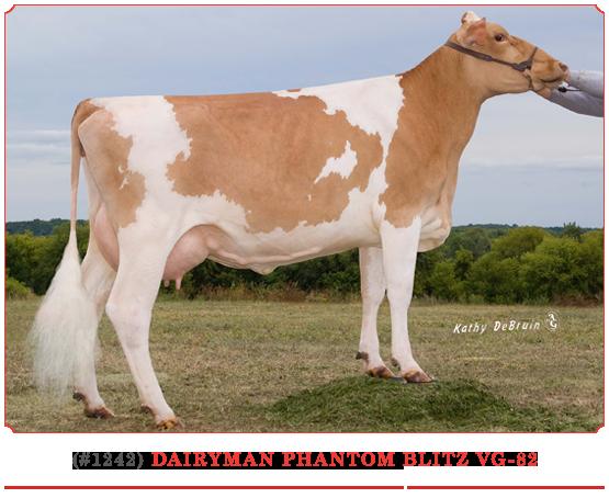 Dairyman Phantom Blitz
