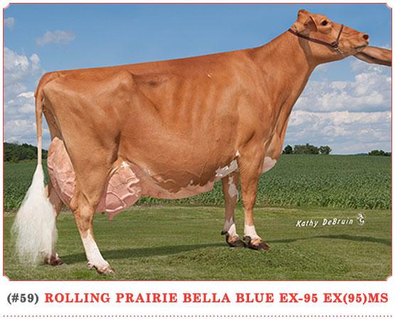 Rolling Prairie Bella Blue