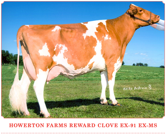 Howerton Farms Reward Clove