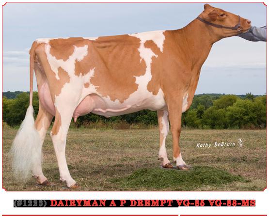 Dairyman A P Drempt