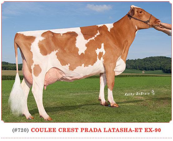 Coulee Crest Prada Latasha-ET