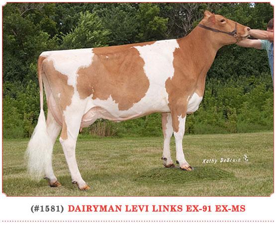 Dairyman Levi Links