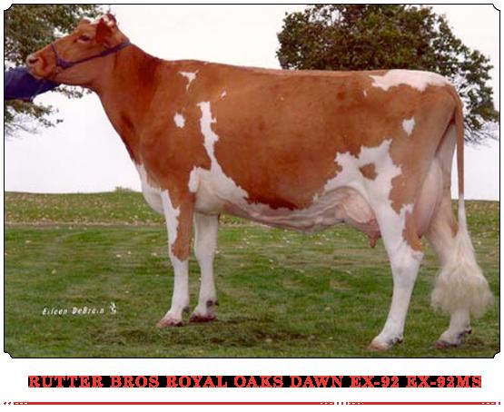 Rutter Bros Royal Oaks Dawn