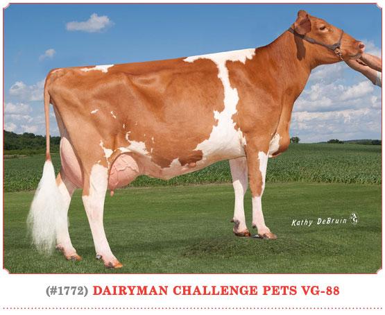 Dairyman Challenge Pets