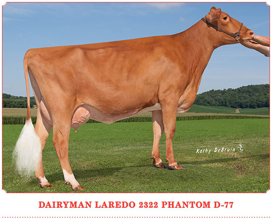 Dairyman Laredo 2322 Phantom