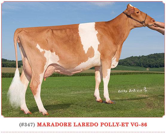 Marodore Laredo Polly-ET