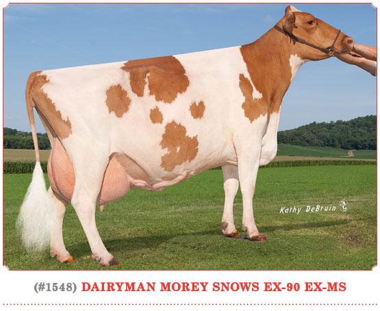 Dairyman Morey Snows