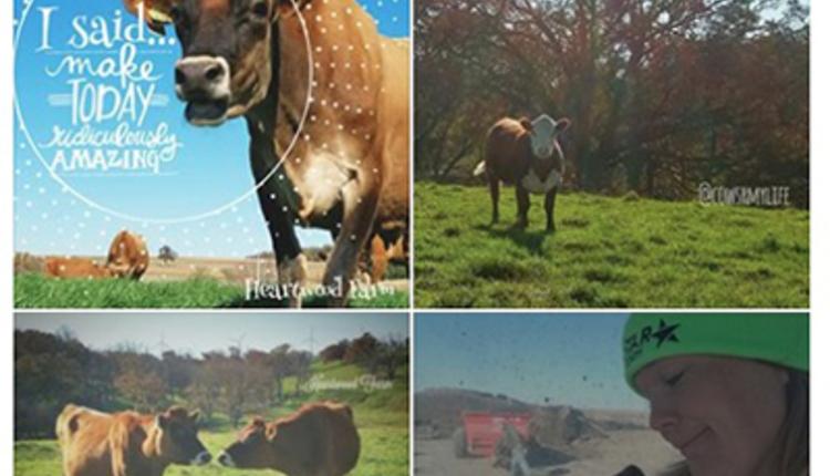 heartwood-farm-photos