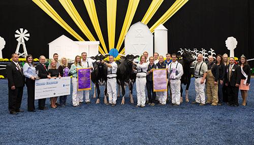 Holstein Champions