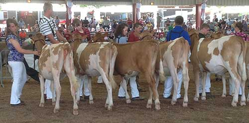 dairy show lineup