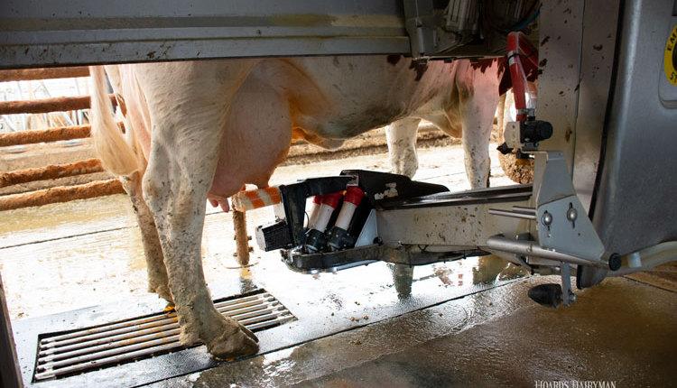 robotic-milking